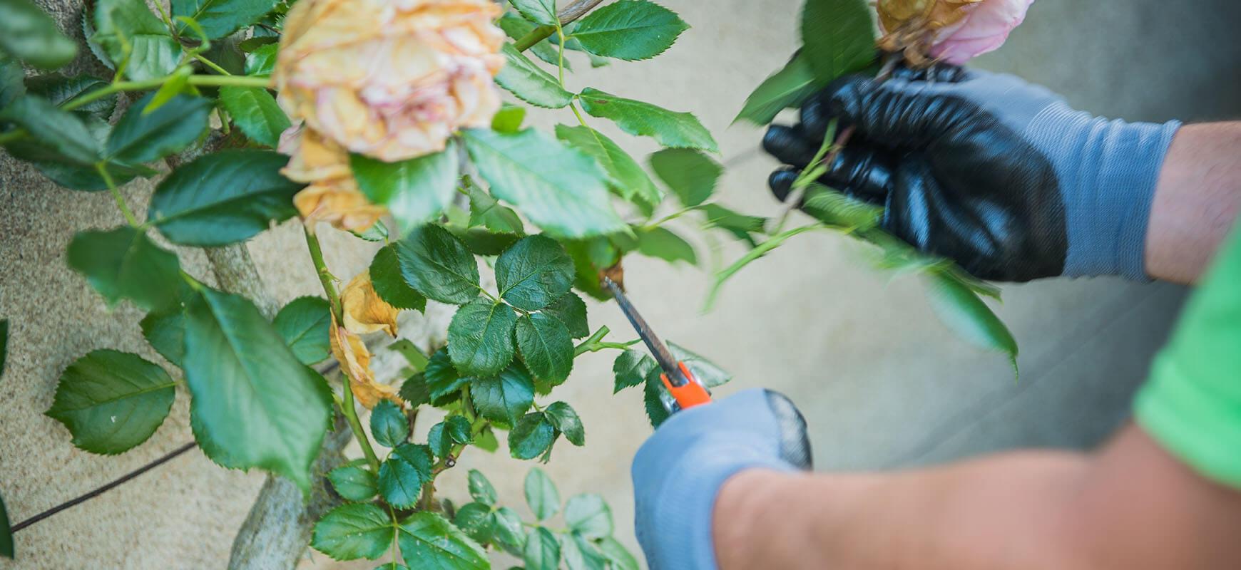 Entretien du jardin : quoi faire à l'automne