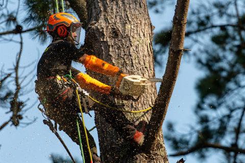 Pour préservez vos arbres, pensez à l'élagage